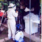 disinfestazione-vespe (5)