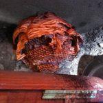 disinfestazione-vespe (10)