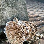 disinfestazione-vespe-8
