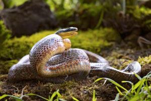 serpente-in-giardino-che-fare